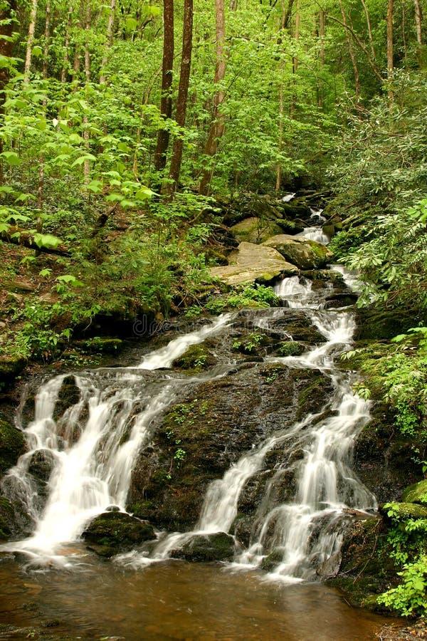 fjädervattenfall royaltyfri fotografi