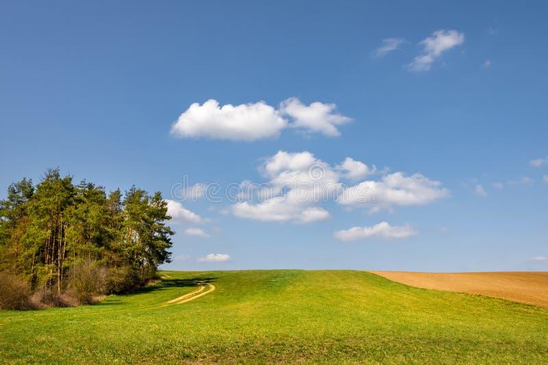 Fjädra ängen, fältet och träd under blå himmel arkivbilder