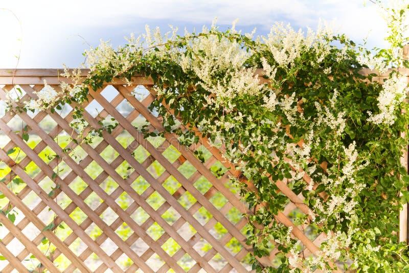 Fjädra Royaltyfria Bilder