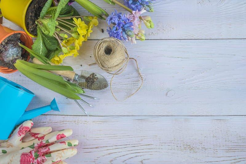 Fjädra arbeta i trädgården bakgrund med brigthvårblommor och garde royaltyfri foto