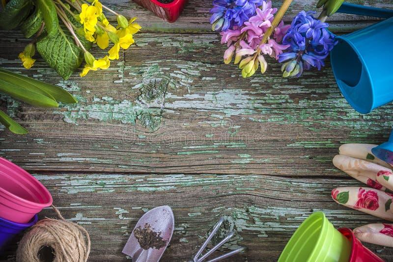 Fjädra arbeta i trädgården ramen med blåa och rosa hyacintblommor arkivfoton