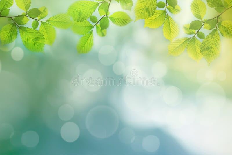 Fjädra bakgrund, gröna trädsidor på suddig bakgrund royaltyfria foton