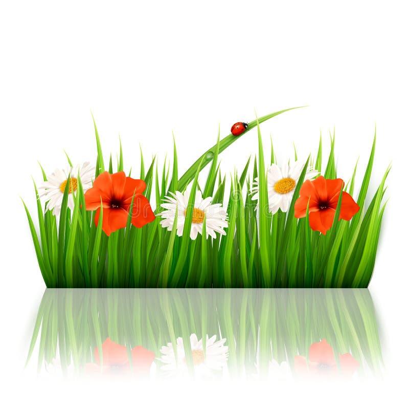 Fjädra bakgrund med blommor, gräs och en ladybu royaltyfri illustrationer