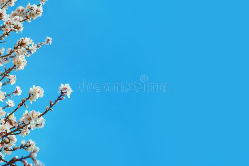Fjädra blomma blommor förgrena sig över bakgrund för blå himmel arkivbilder