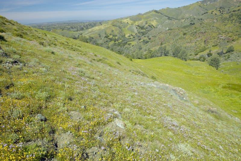 Fjädra blommafält och Rolling Hills av det Figueroa berget nära Santa Ynez och Los Olivos, CA royaltyfri foto