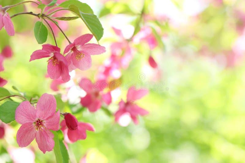 Fjädra blomman arkivbild