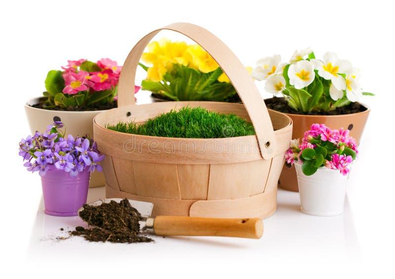 Fjädra blomman i kruka med korgen för grönt gräs royaltyfri bild