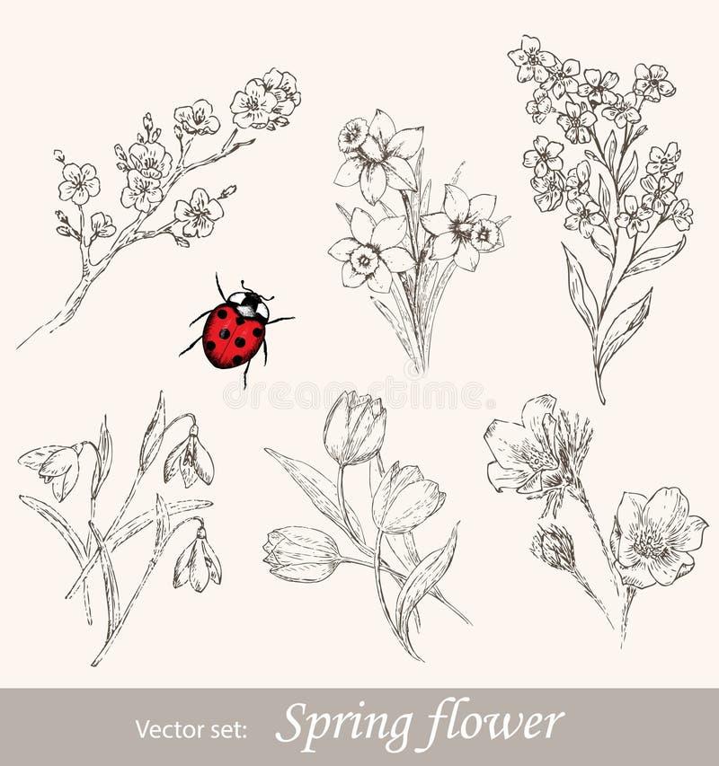 Fjädra blommauppsättningen stock illustrationer