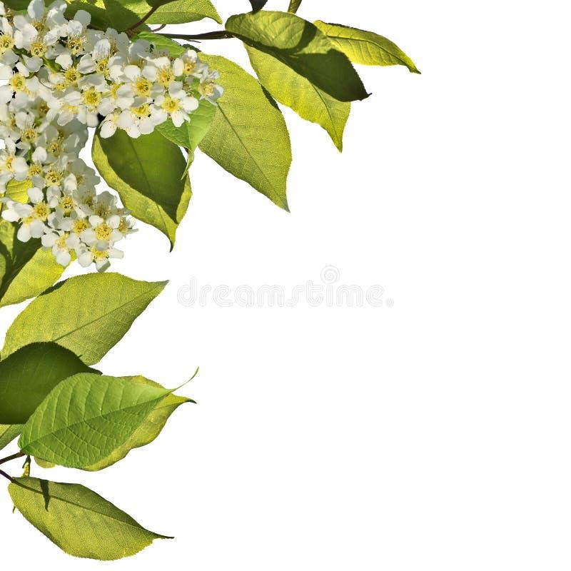 Fjädra blomstra bakgrund - abstrakt blom- gräns av gräsplan l arkivfoto