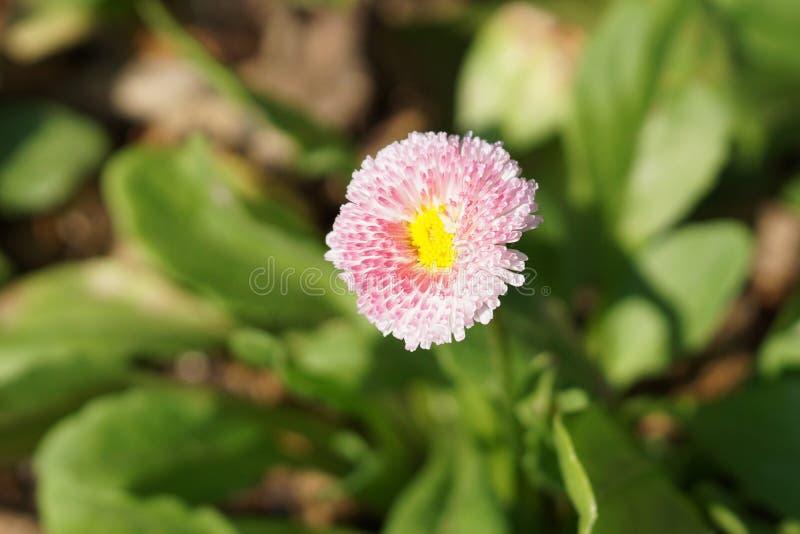 Fjädra @ delen 3 49 för Brooklyn botanisk trädgård 99 royaltyfri fotografi