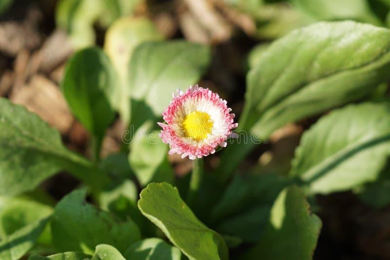 Fjädra @ delen 3 50 för Brooklyn botanisk trädgård 99 royaltyfria bilder