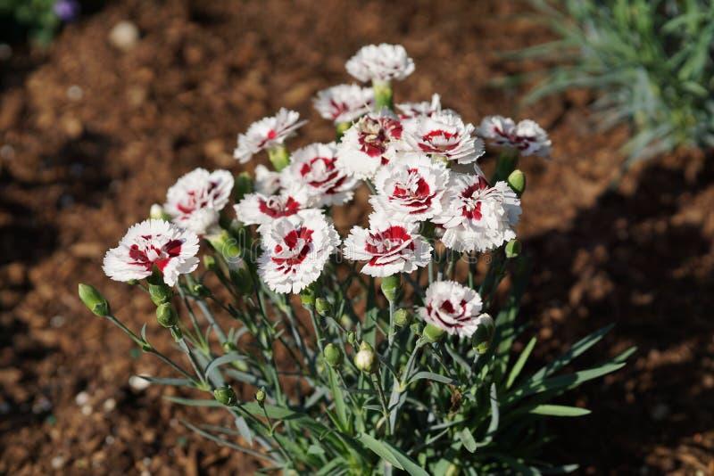 Fjädra @ delen 3 80 för Brooklyn botanisk trädgård 99 arkivfoton