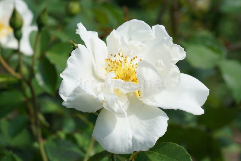 Fjädra @ delen 3 96 för Brooklyn botanisk trädgård 99 arkivbild