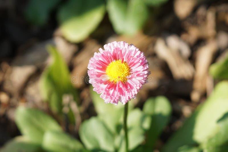 Fjädra @ delen 4 4 för Brooklyn botanisk trädgård 99 arkivbild