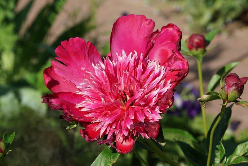 Fjädra @ delen 4 9 för Brooklyn botanisk trädgård 99 royaltyfria foton