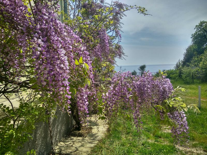 Fjädra den Gelendzhik staden, berg, havet, blommor, solen, skönhet arkivfoto