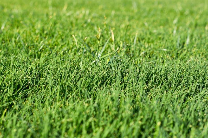 Fjädra fältet av ljust - jordning för grönt gräs arkivbild