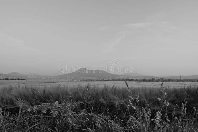 Fjädra fältet och den Lovos kullen på bakgrund i turist- område för tjeckiska centrala berg under soluppgång med svartvit styliza arkivbilder