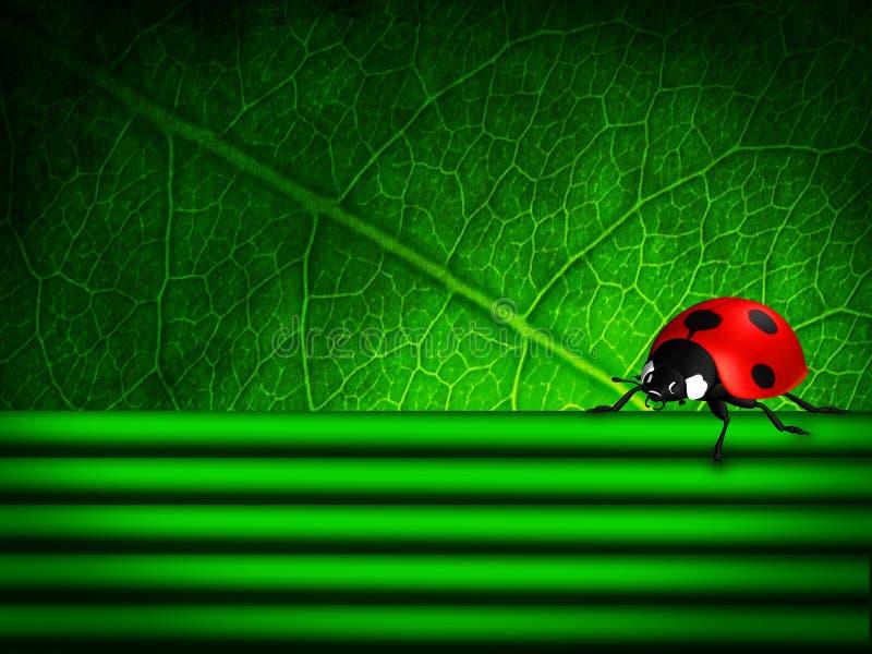 Fjädra bakgrund med leafen och nyckelpigan vektor illustrationer