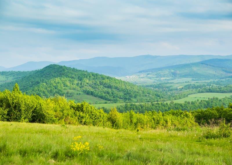 Fjädra i berg Glänta av vårblommor och blåa berg royaltyfri foto