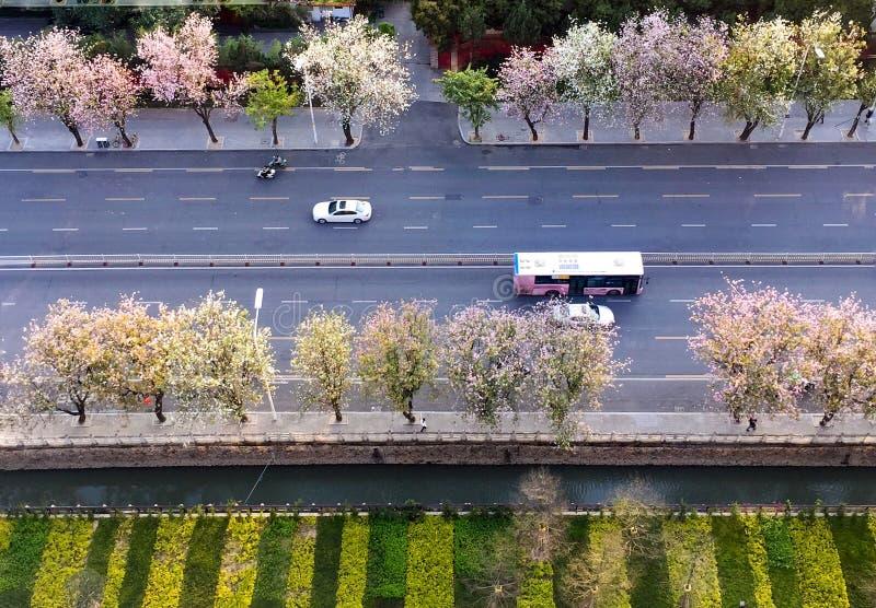 Fjädra i stad fotografering för bildbyråer