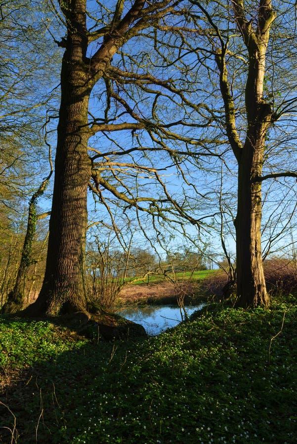 Fjädra landskapet, gamla träd med de första sidorna på sjön och wo arkivfoton
