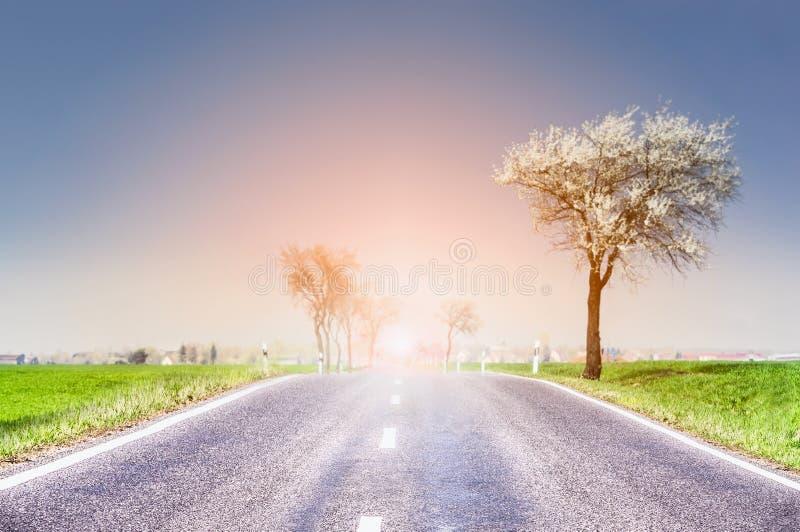 Fjädra landskapet med vägen och lösa körsbärsröda blomningar arkivfoto