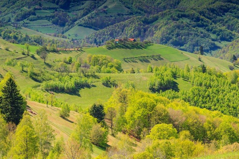 Fjädra landskappanorama, kullar och ängen, Holbav, Transylvania, Rumänien royaltyfri foto