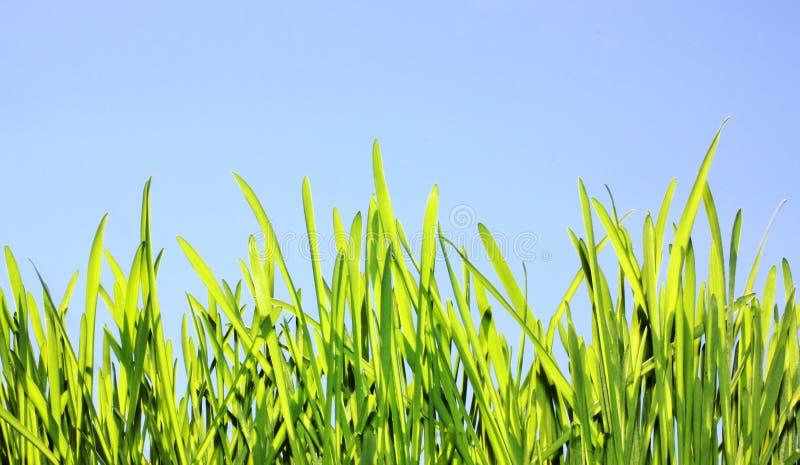 Fjädra naturbakgrunden, sommargräsmatta i solljus arkivfoto