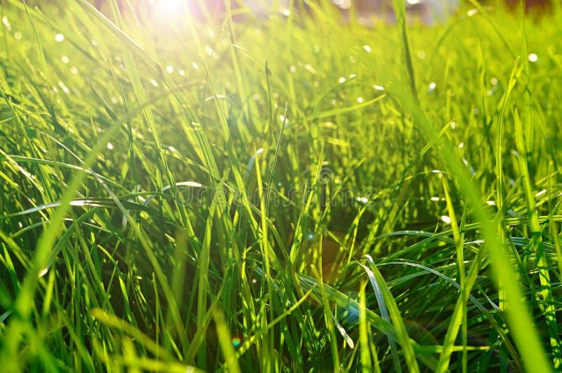 Fjädra naturlig bakgrund - closeup av nytt grönt gräs på gräsmattan under ljust solljus royaltyfria bilder