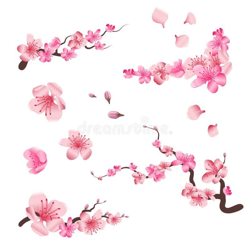 Fjädra sakura körsbärsröda blomma blommor, rosa kronblad och förgrena sig vektoruppsättningen för din egen design vektor illustrationer