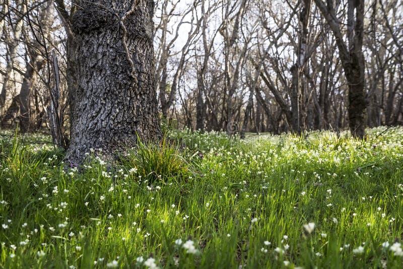 Fjädra skogängen med frodigt grönt gräs och blommor royaltyfri bild