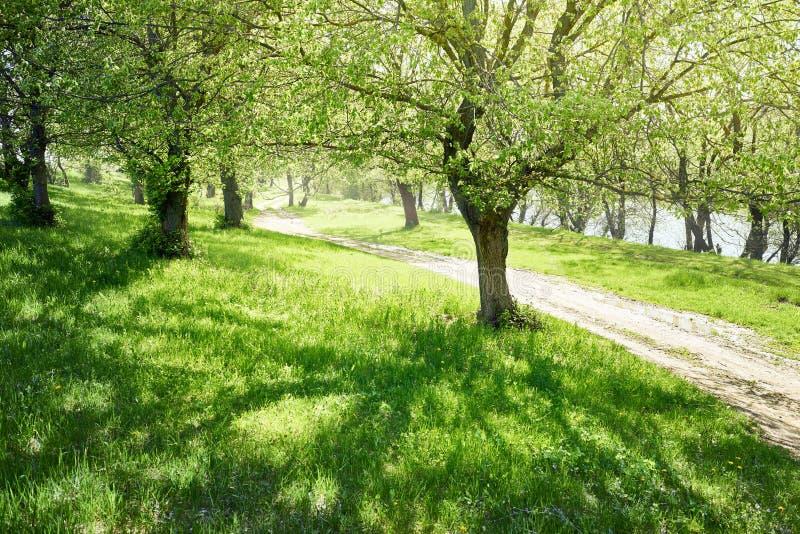 Fjädra skogen på den soliga dagen, ljust ljus och skuggor på grasna arkivbild
