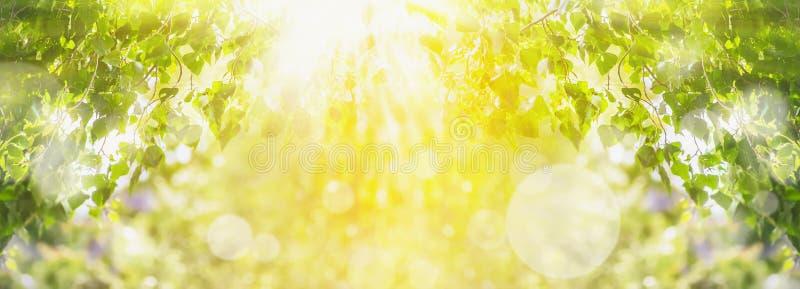 Fjädra sommarbakgrund med gröna träd-, solljus- och solstrålar
