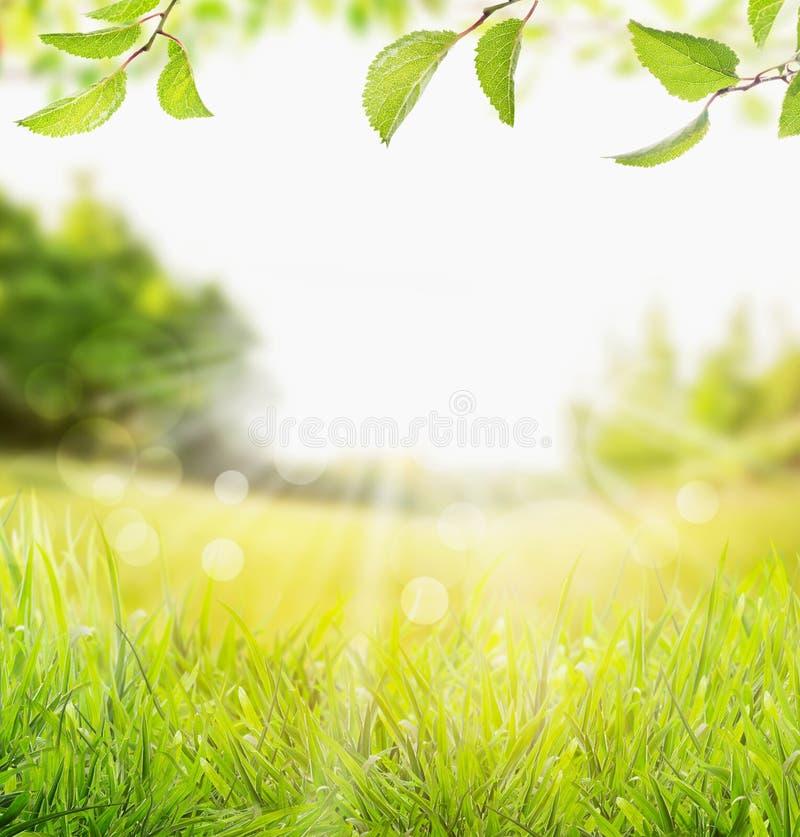 Fjädra sommarnaturbakgrund med gräs, trädfilialen med gräsplansidor och solstrålar