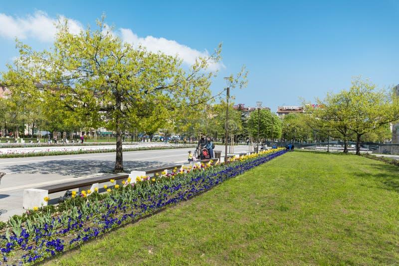 Fjädra trädgården med tulpan som är främsta av den nationella slotten av kultur, Sofia, Bulgarien royaltyfri foto