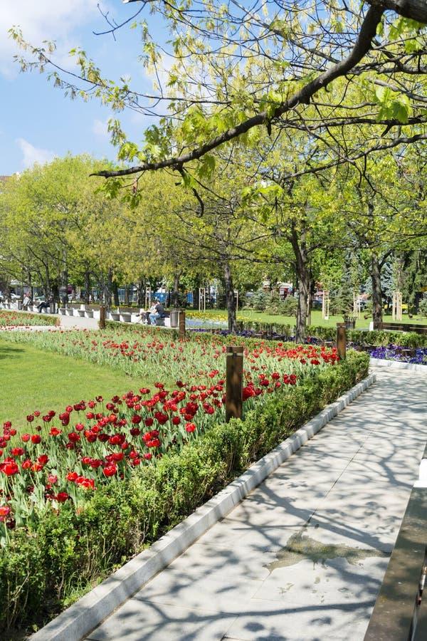 Fjädra trädgården med tulpan som är främsta av den nationella slotten av kultur, Sofia, Bulgarien fotografering för bildbyråer