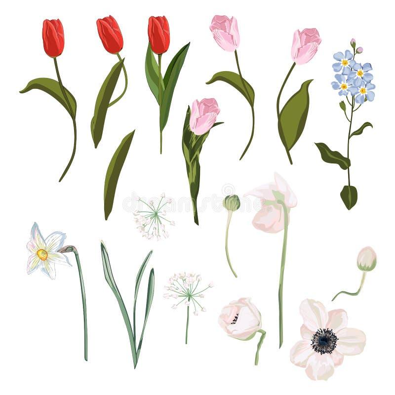 Fjädra uppsättningen av den rosa röda tulpan, sidor, blommande anemoner, pingstliljan, förgätmigejblommor, den isolerade botanisk vektor illustrationer