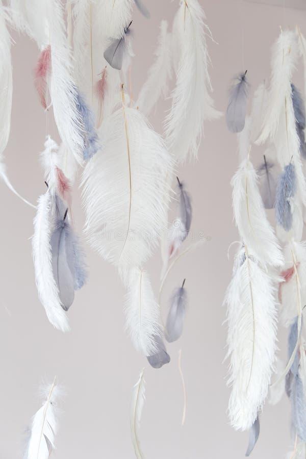 Fjädrar för inregarnering Luft och försiktig fotozon slapp fokus royaltyfri foto