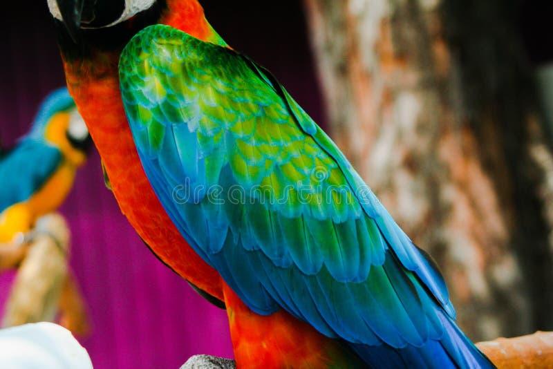 Fjädrar i paradis fotografering för bildbyråer