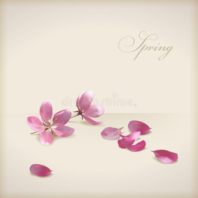 Fjädrar körsbärsröda blomningblommor för blom- vektor design royaltyfri illustrationer