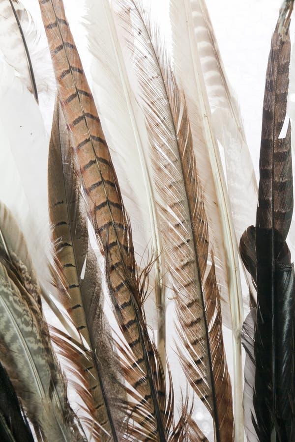 Fjädrar stänger sig upp royaltyfri fotografi