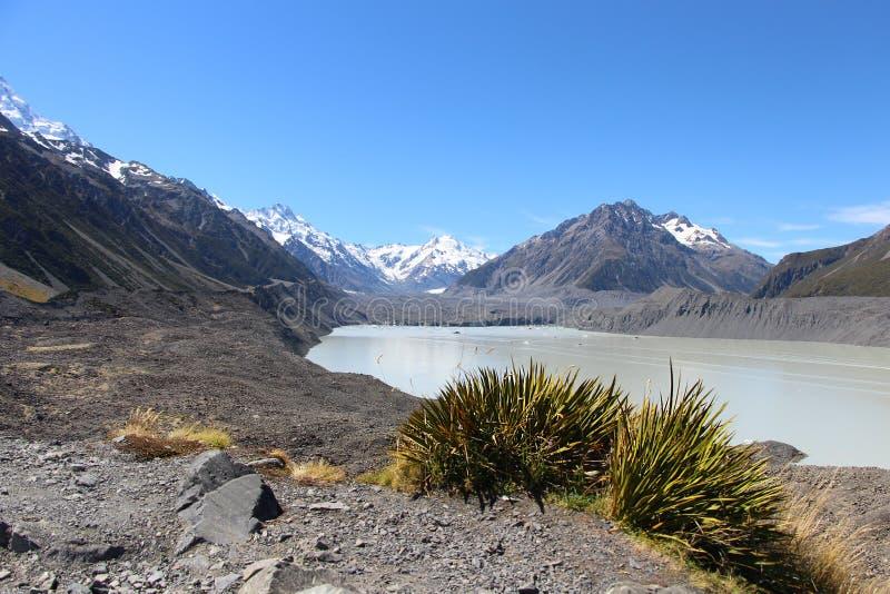 Fjällängar med gräs i snöbergmaximumet Nya Zeeland royaltyfria bilder