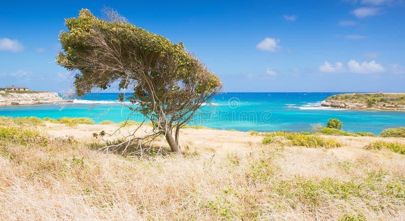 Fjärd för bro för jäkel` s - det karibiska havet - Antigua och Barbuda arkivbild