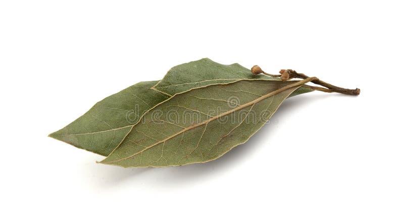 fjärd torkad leaf royaltyfria bilder