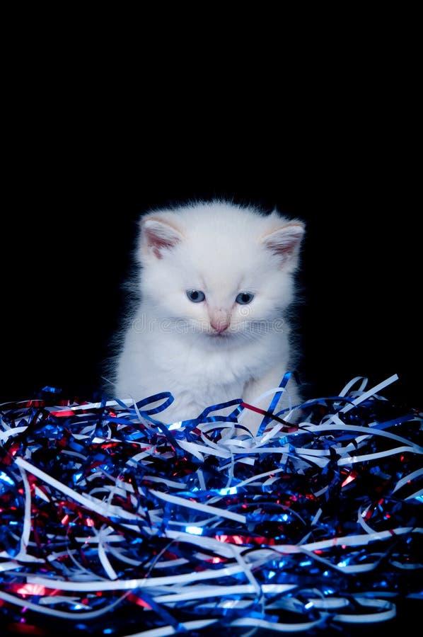 fjärde gråa juli kattungebanderoller royaltyfria foton