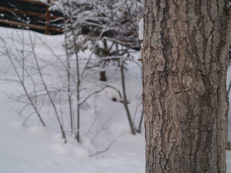 Fjärdedelträd arkivbild