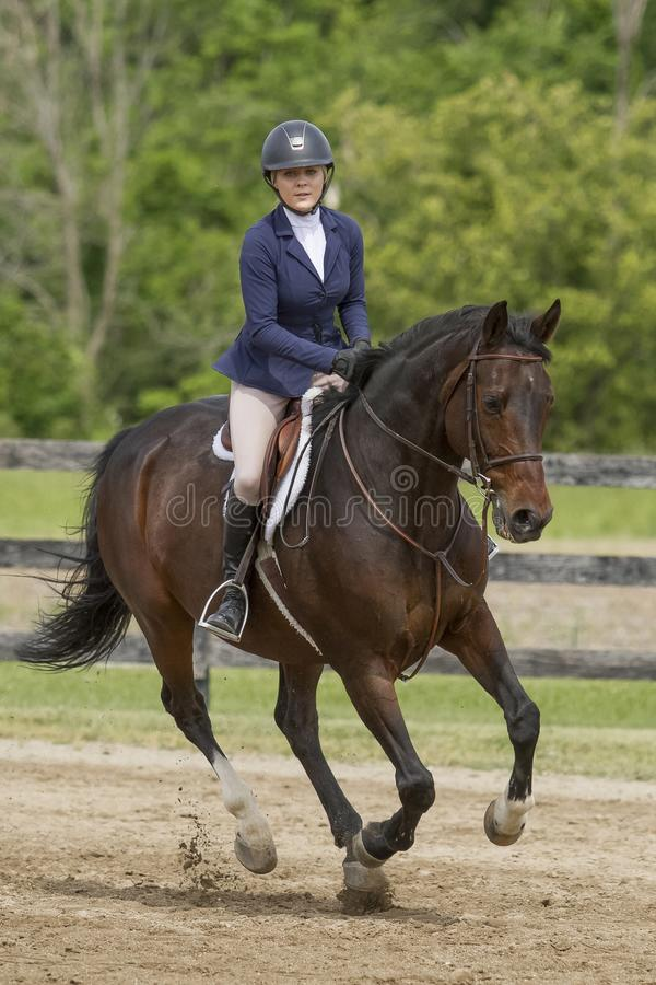Fjärdhäst och kvinnligryttare på en canter royaltyfria foton
