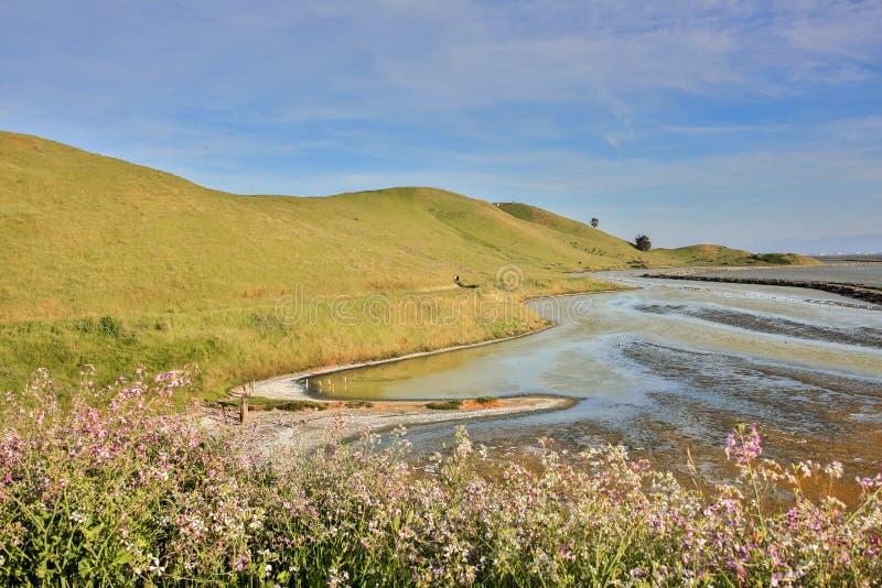Fjärdsiktsslingan, regionala prärievargkullar parkerar, den östliga fjärden, nordliga Kalifornien royaltyfri foto