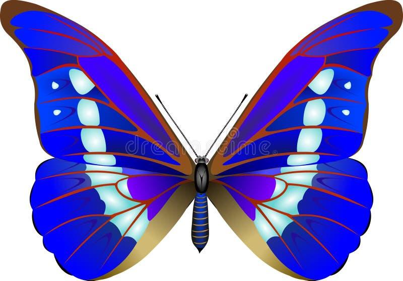 fjäril vektor illustrationer